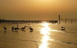 Cigni sulla spiaggia (ph. Digital Photo S.G.)